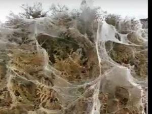 жители Анапы испугались нашествия пауков