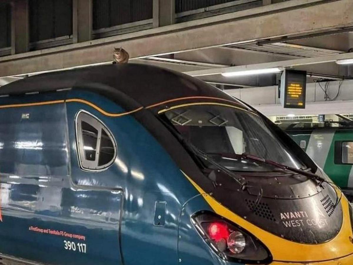 Отправление поезда задержали почти на 3 часа из-за кота на крыше