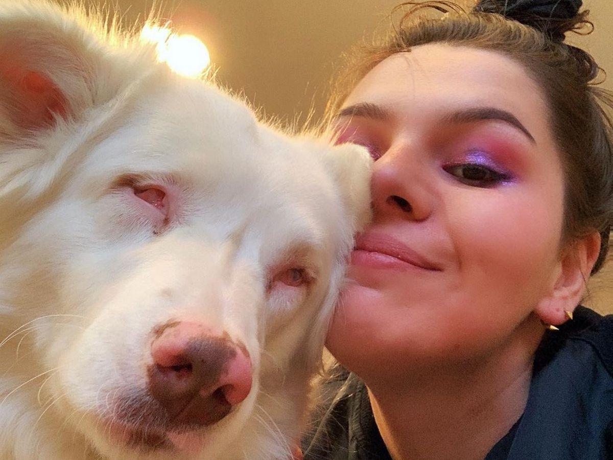 Видео встречи глухой и слепой собаки с хозяином после долгой разлуки завирусилось в Сети