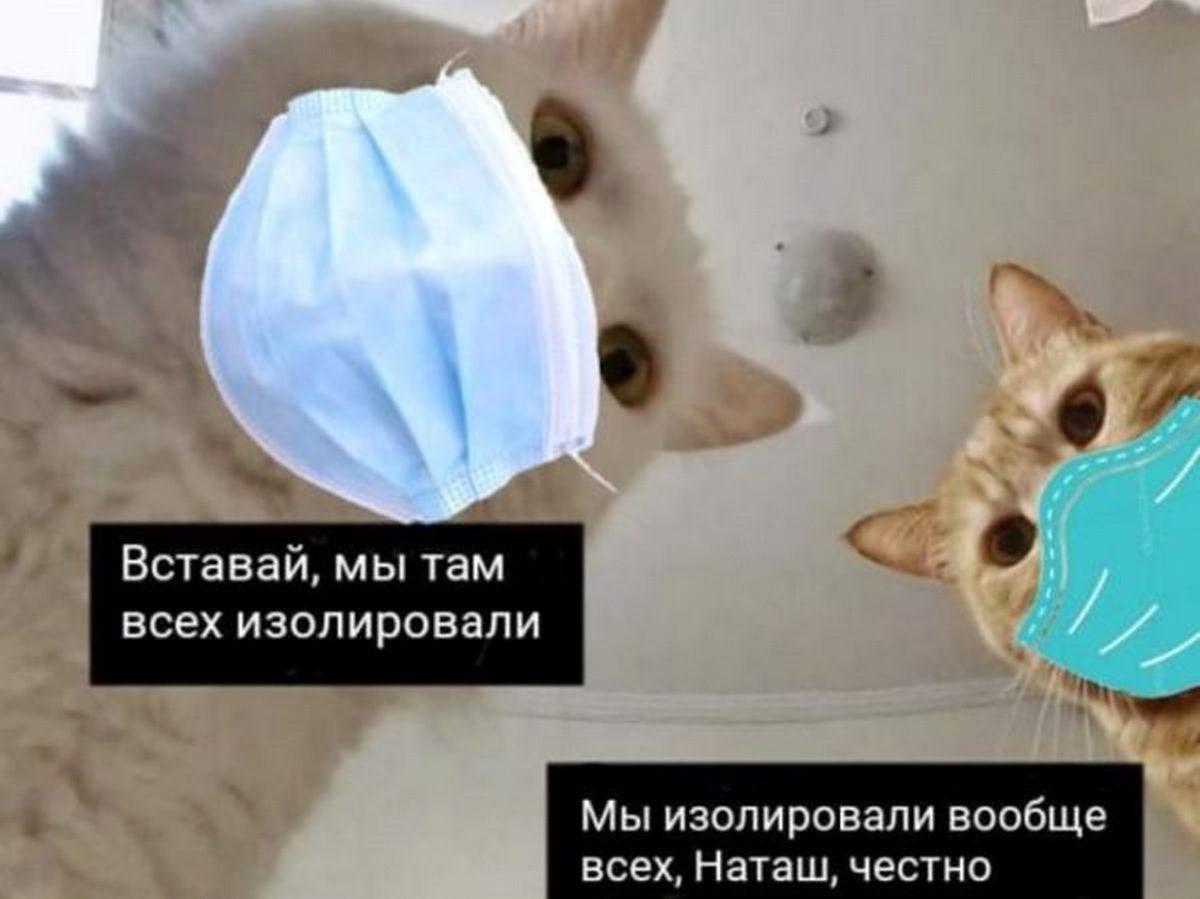 Автор популярного мема про котов запатентует свою шутку