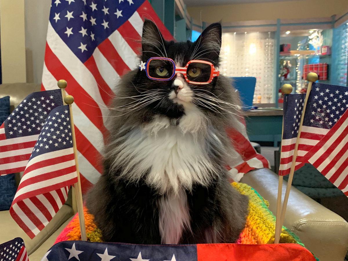 Кошка стала ассистентом окулиста и рассказывает детям о плюсах очков