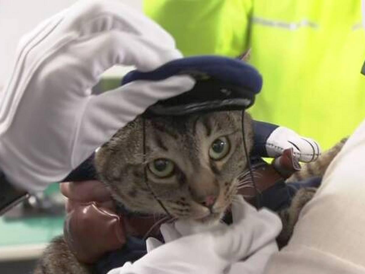 Кошка возглавила отделение полиции на один день