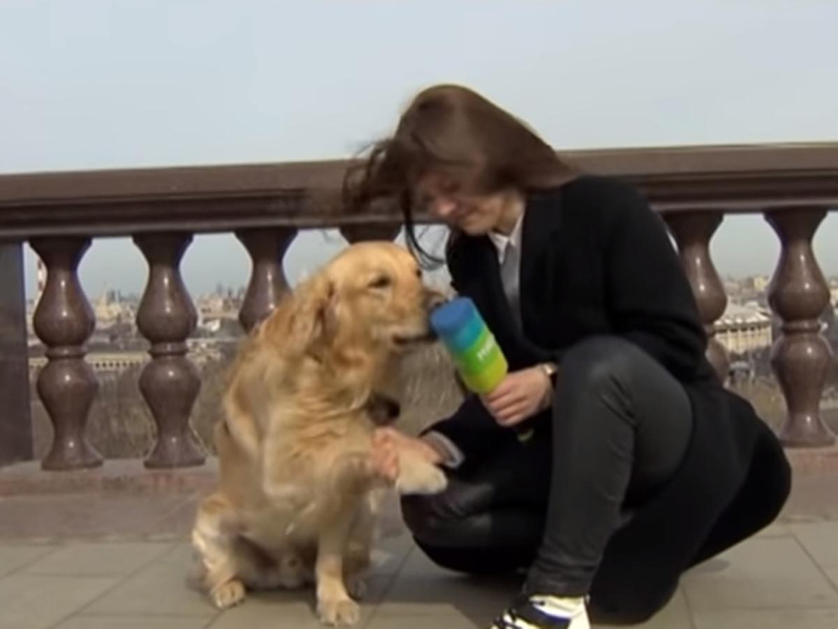 Собака украла микрофон
