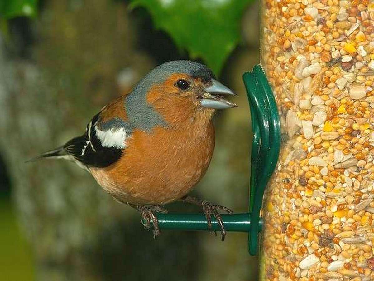 Гражданина Гайаны попытался провезти через границу птиц, спрятав их бигудях