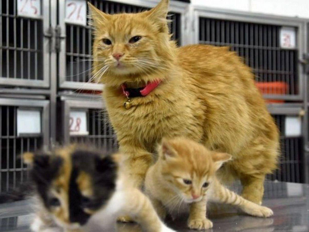 Кошка принесла больных котят в ветеринарную клинику