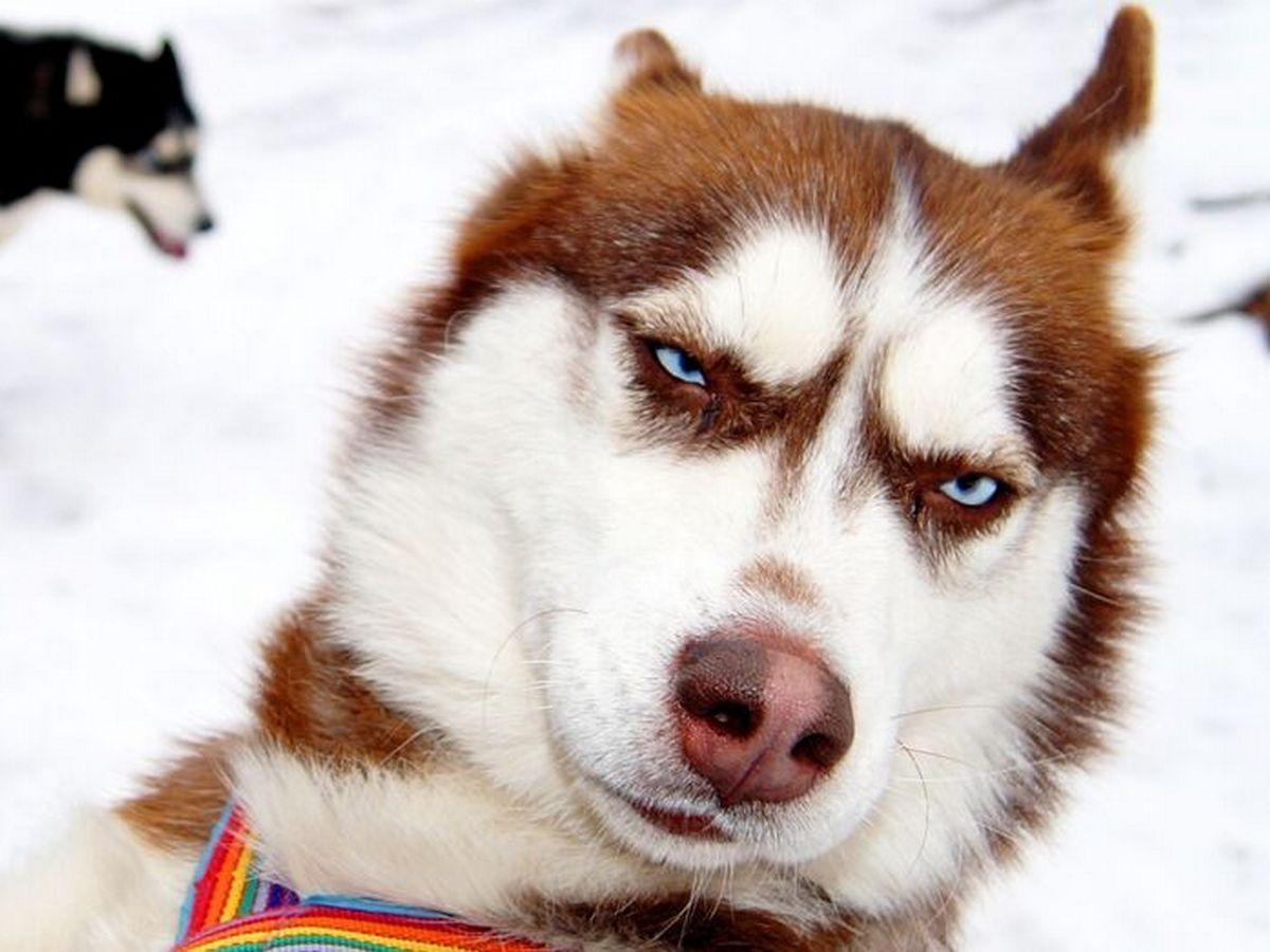 Блогер создал устройство на основе ИИ для грустных собак