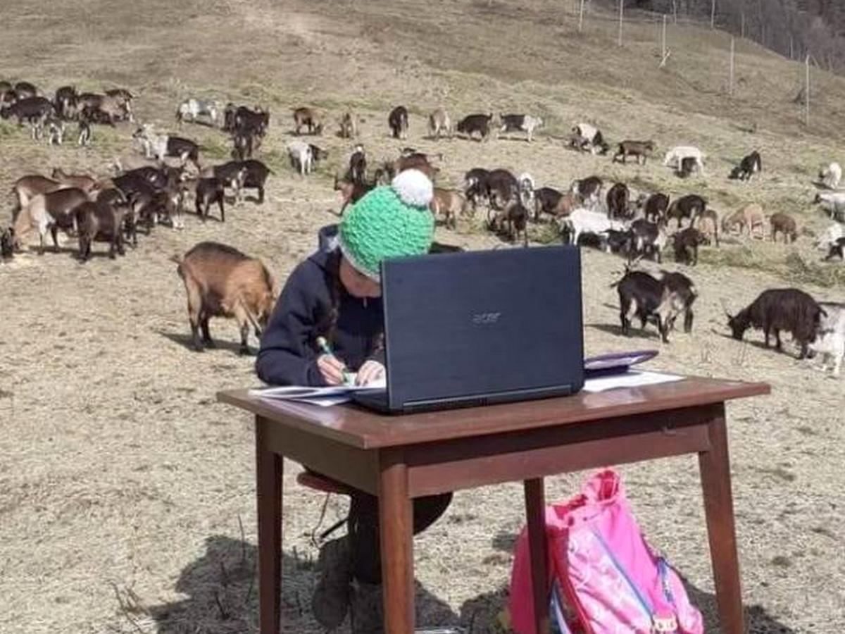 Школьница из Италии учится дистанционно, находясь на пастбище