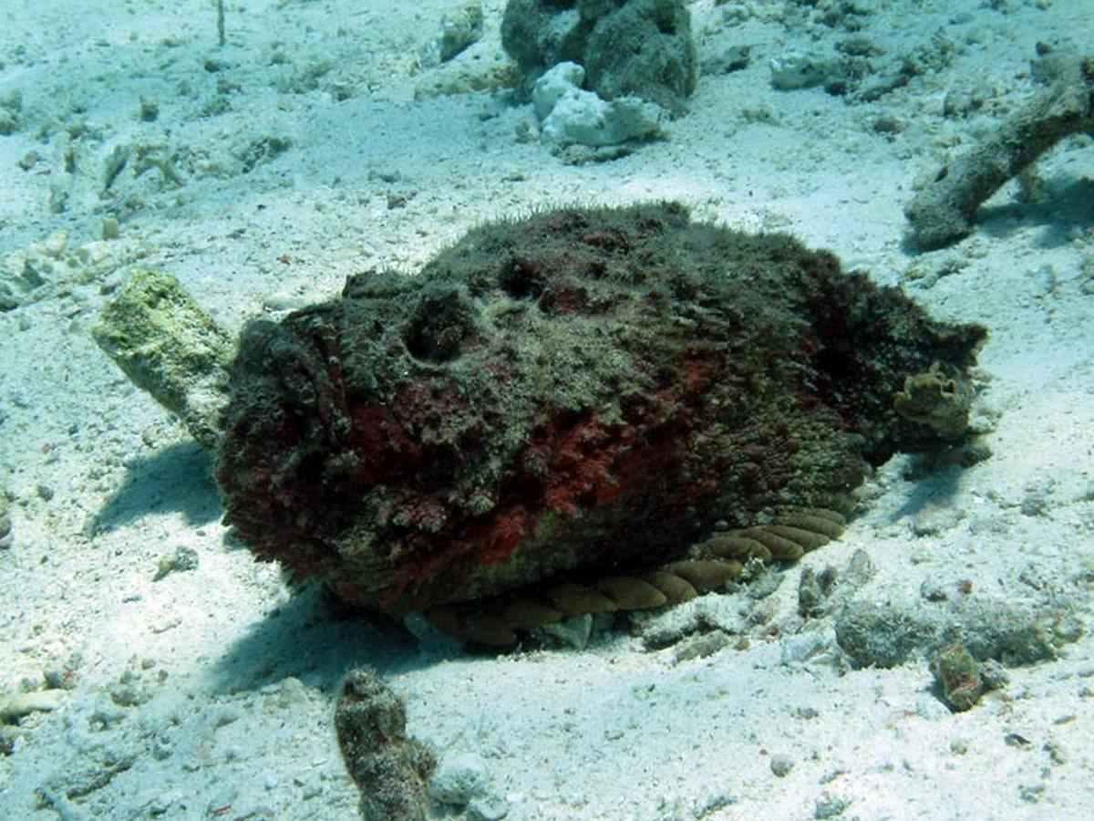 Австралиец поймал самую уродливую рыбу в мире