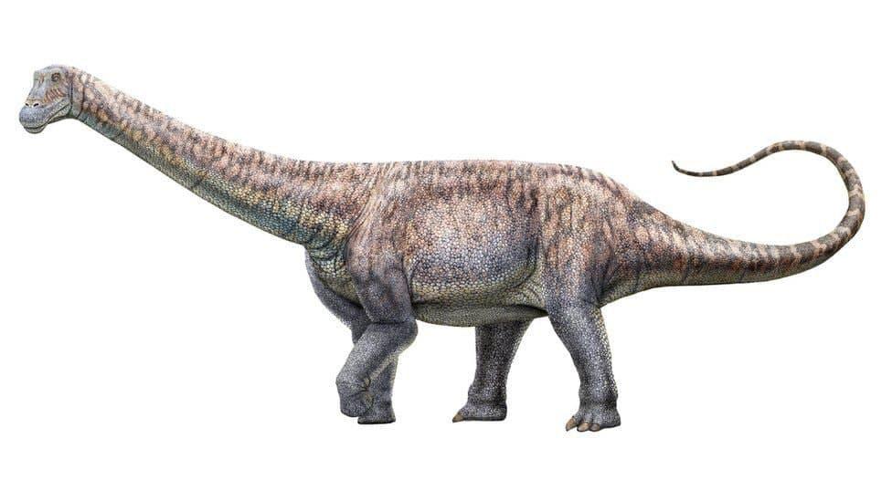 Палеонтологи обнаружили неизвестный вид динозавра в пустыне Чили