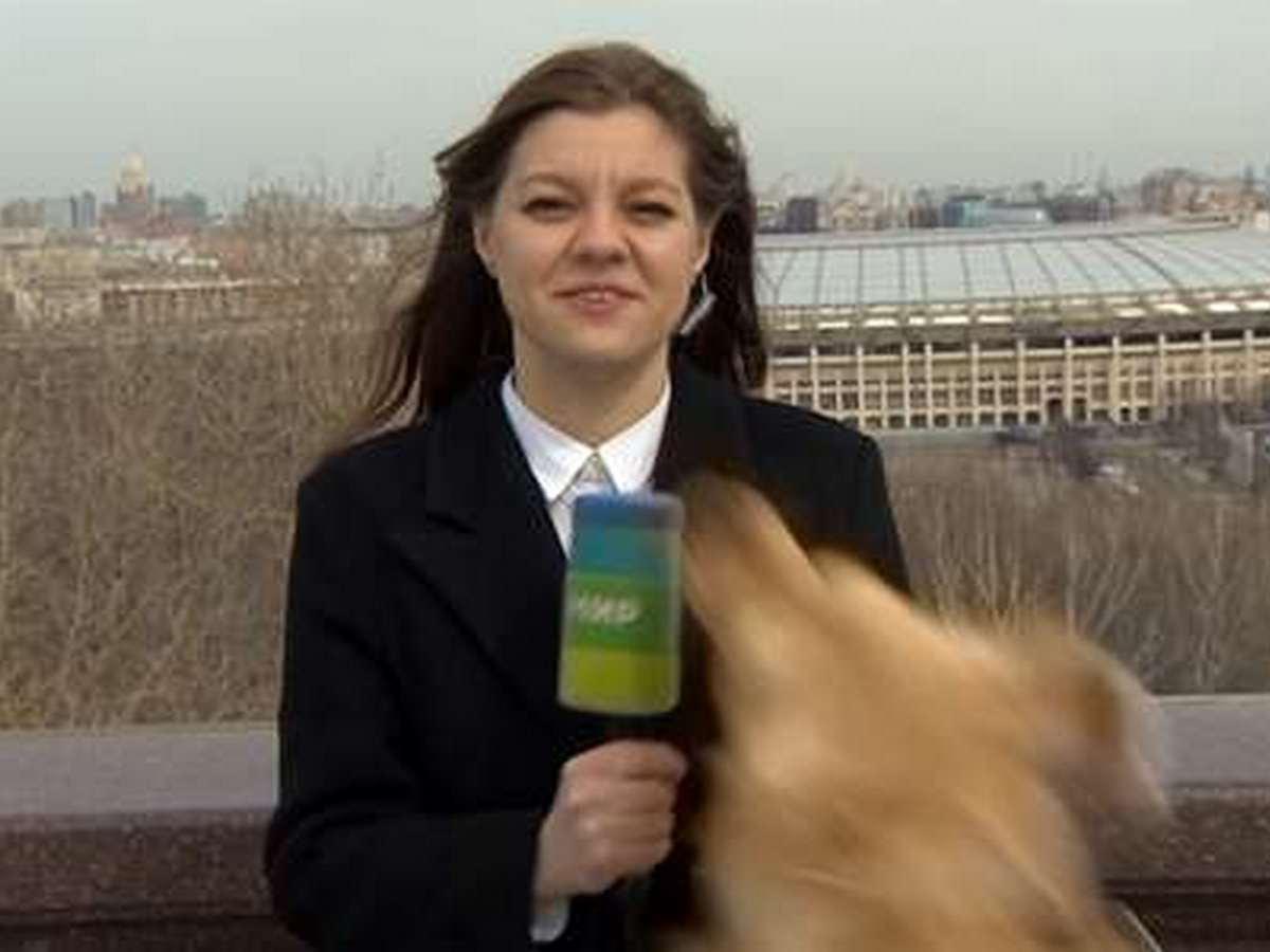 Лабрадор украл микрофон у корреспондента телеканала в прямом эфире