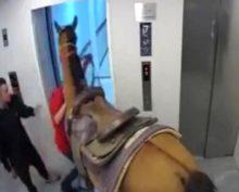 Израильтянин приехал в гости на лошади и зашел вместе с ней в лифт