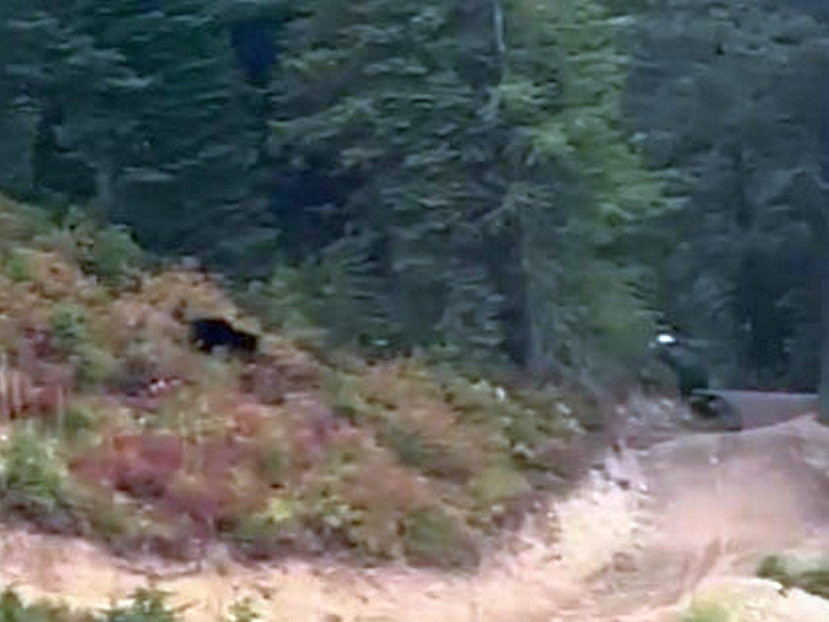 Велосипедист сумел достичь рекордной скорости, спасаясь от медведя