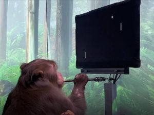 Neuralink ролик с чипированной обезьяной