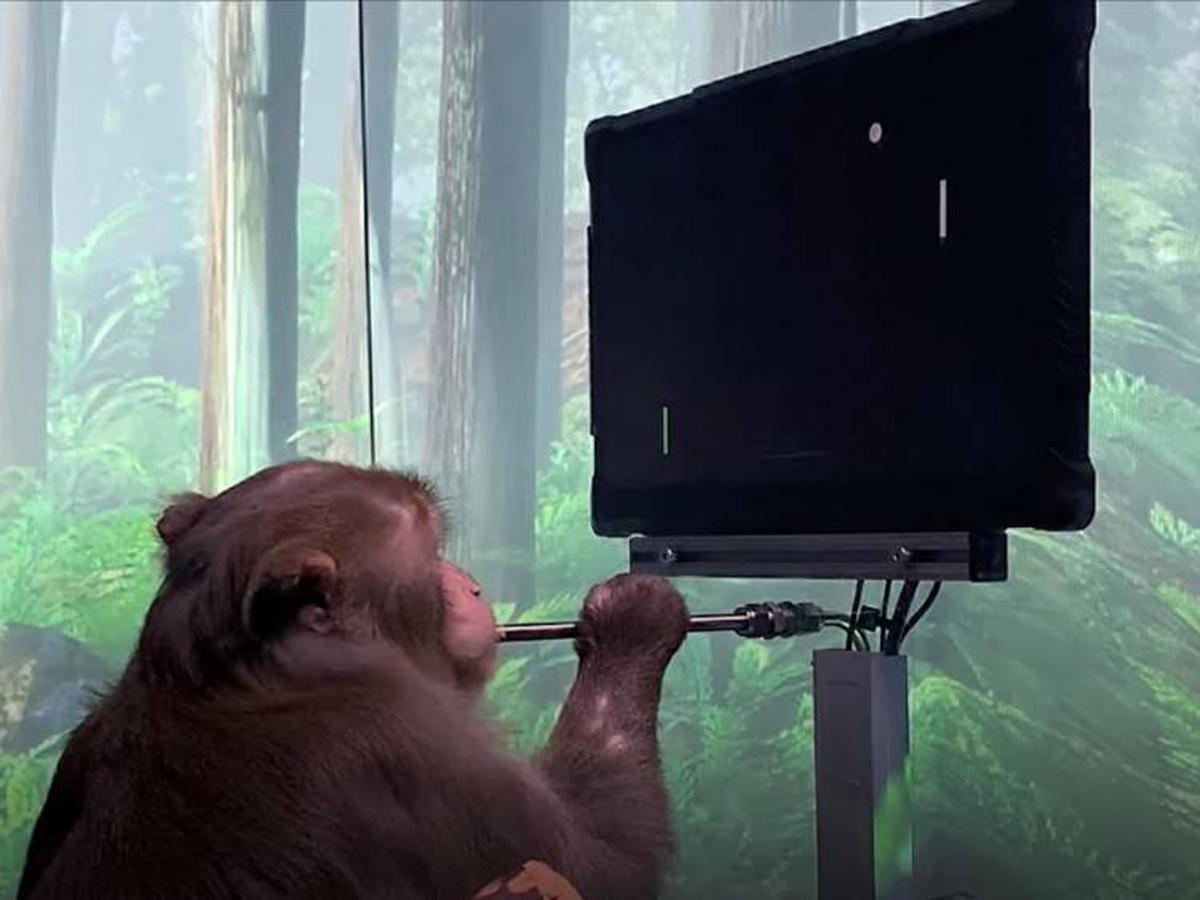 Neuralink Маска показал ролик с играющей в видеоигры чипированной обезьяной