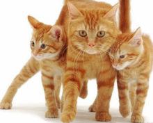Кошка дала котятам открытый урок скалолазания
