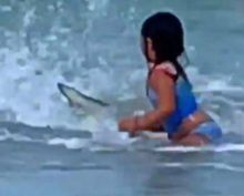 Shark Dangerously Close to Six Year Old Girl at Hawaii Beach