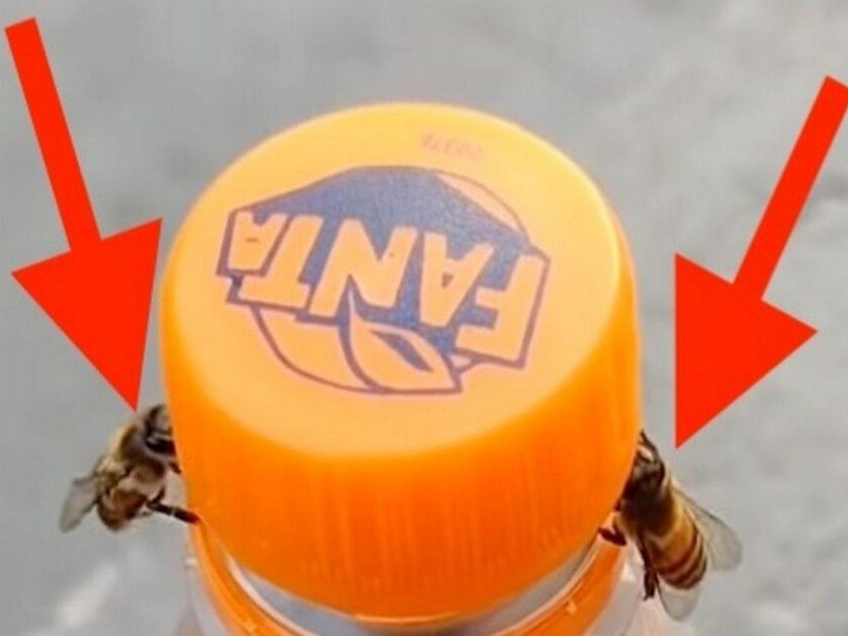 Пчелы открыли бутылку с газировкой