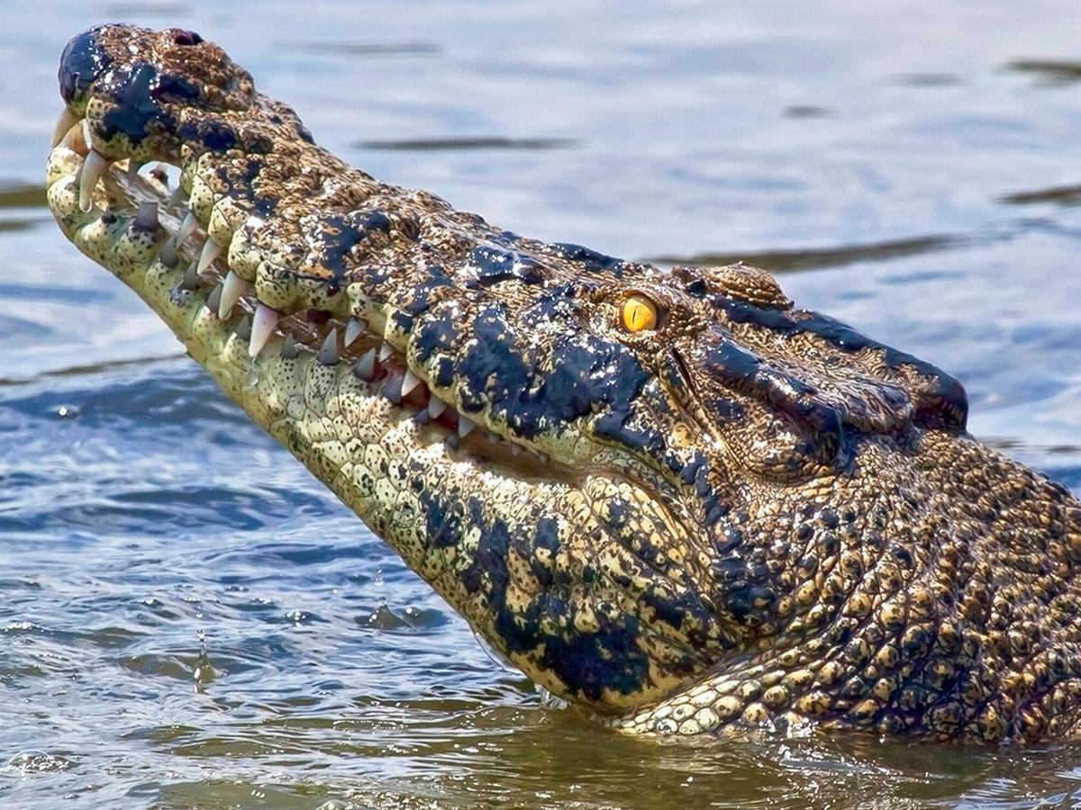 Рыбак снял на видео, как ему на удочку попал аллигатор
