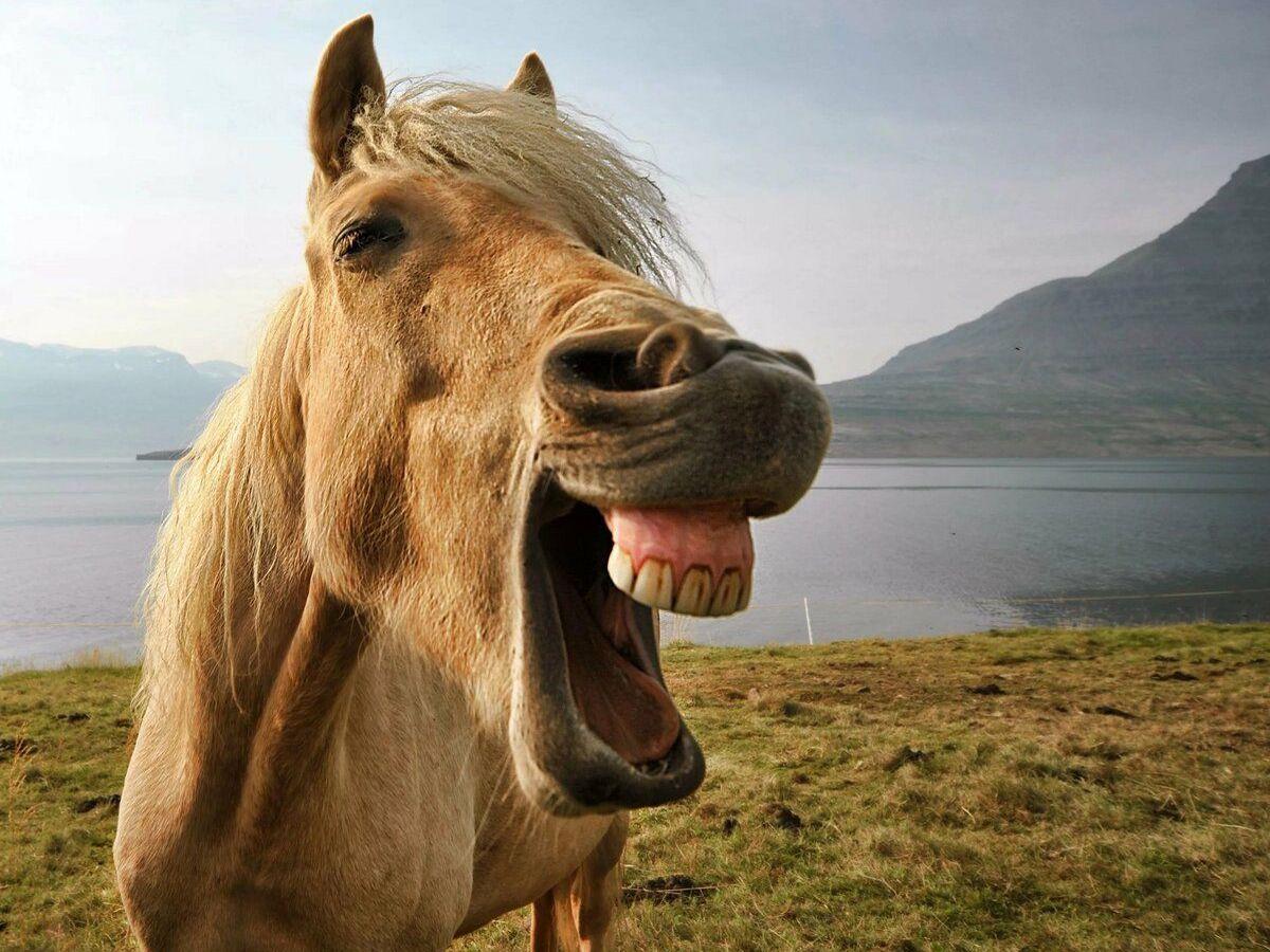 Лошадь смеется