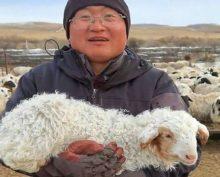 Овца научилась ходить по-человечески и собрала около 15 тыс. просмотров
