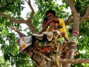 Студент 11 дней провел в изоляции на дереве, чтобы не заразить родных коронавирусом