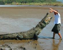 Мужчина, рассказывая туристам о крокодилах, едва не стал их обедом