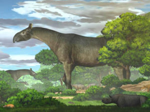 Гигантский носорог