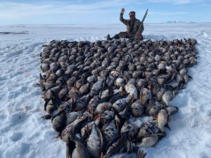 Депутат выложил из убитых птиц Чукотка-2021