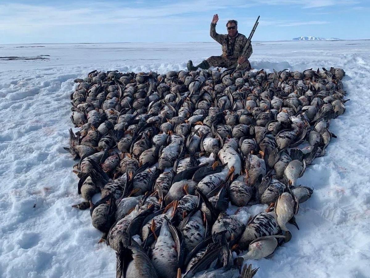 СМИ: депутат-единоросс выложил из тушек 200 птиц надпись «Чукотка 2021» (ФОТО)