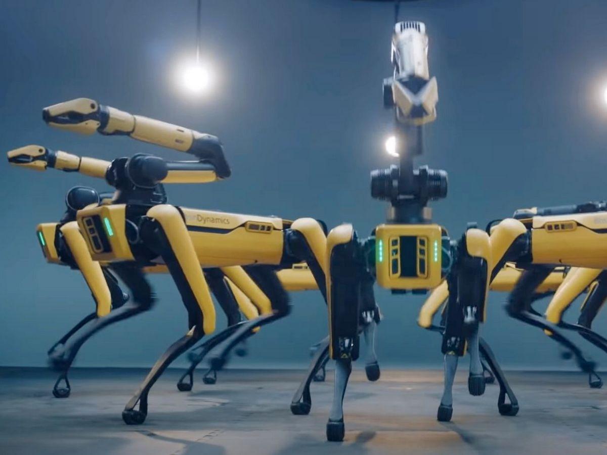 Танцующие роботы-собаки набирают популярность в Сети