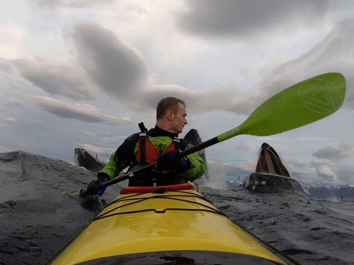 Каякер едва не лишился рассудка, увидев за своей спиной трех китов