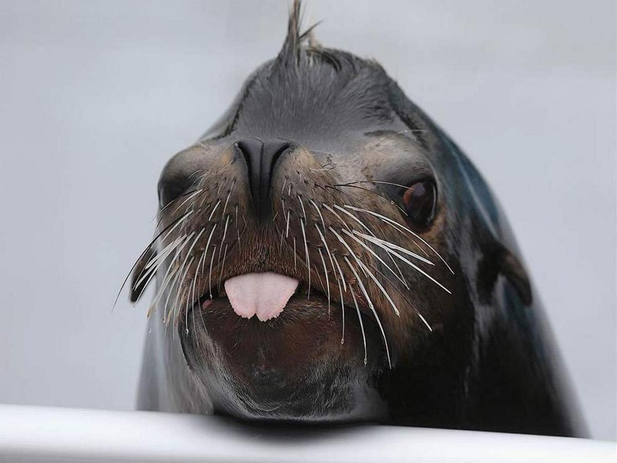 """Морской лев потребовал у рыбака """"ответить за слова"""""""