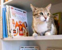 Обьявлены победители конкурса на звание лучшей служебной кошки России