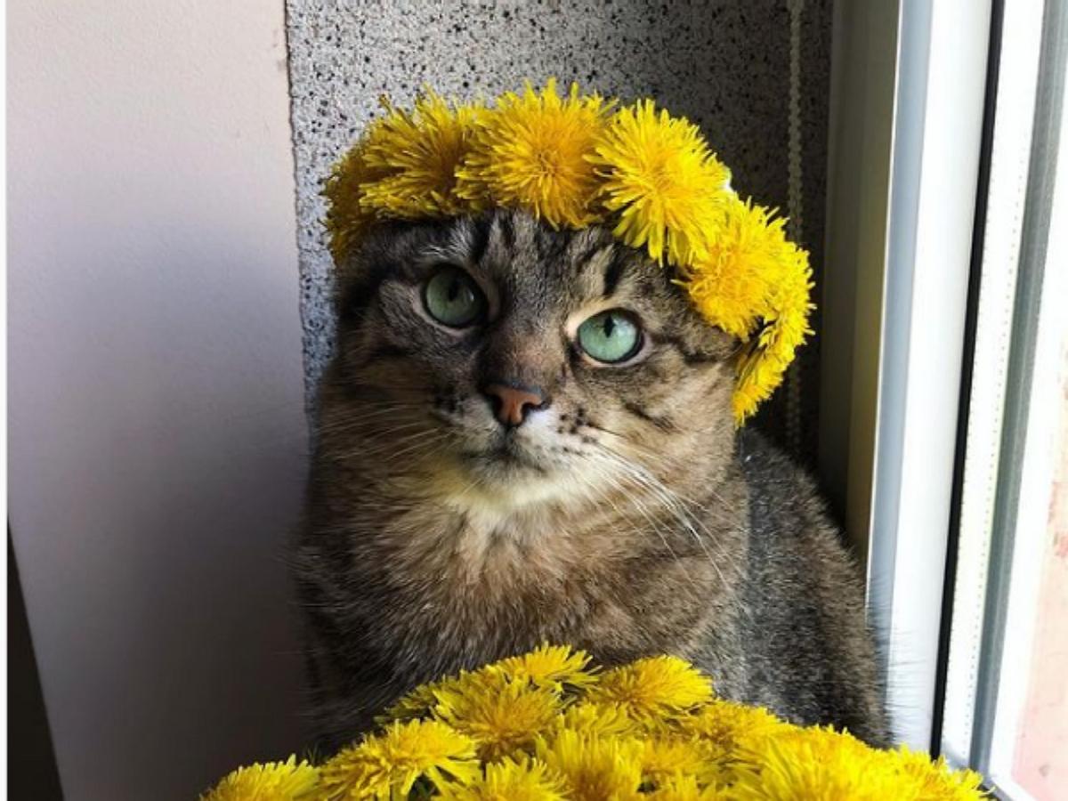 Грустный кот Степан из Украины стал мемом в Сети