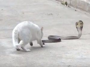 Кот полчаса держал оборону, не пуская в дом ядовитую змею