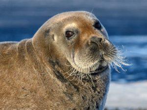 Британская леди обнаружила в своем саду тюленя