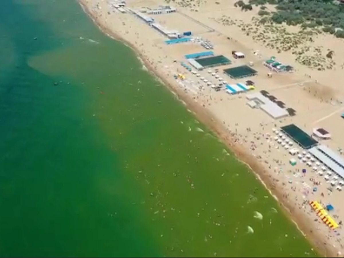 Черное море стало зеленым