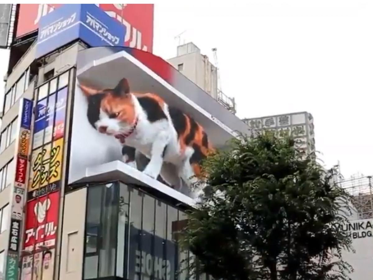 В Токио установили рекламный билборд с огромным мяукающим 3D котом