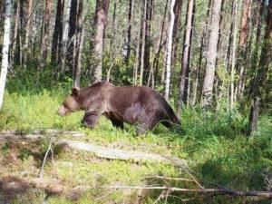 Красноярск медведь убил туриста