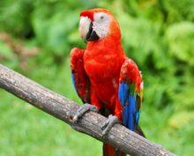 Кемеровский ВУЗ оштрафовали из-за попугаев