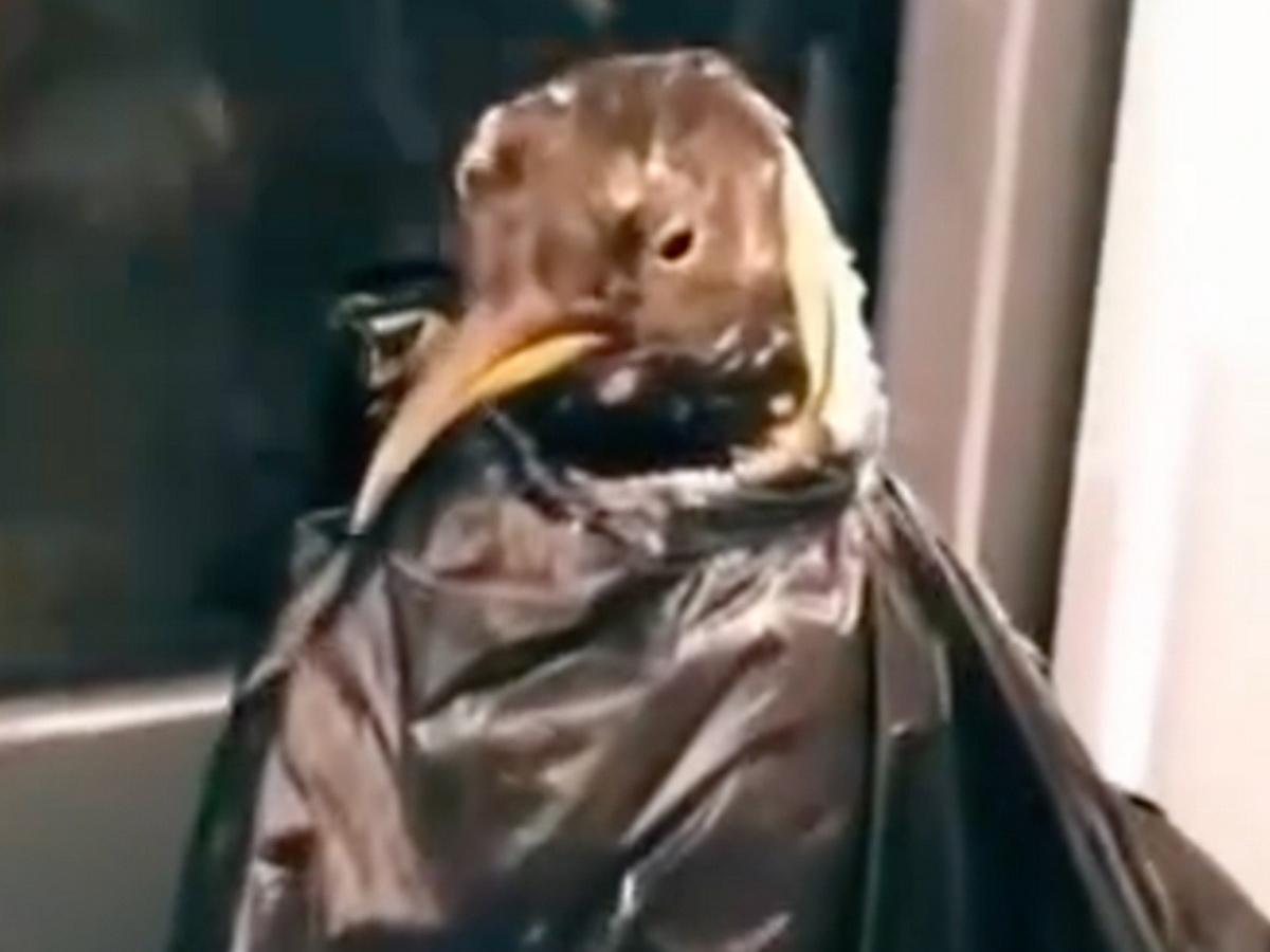 пингвин в метро
