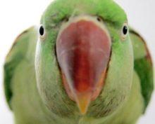 Попугай удивил интернет поперечным шпагатом