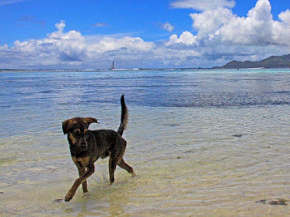 Годовалый пес кусает море, впервые попав на пляж