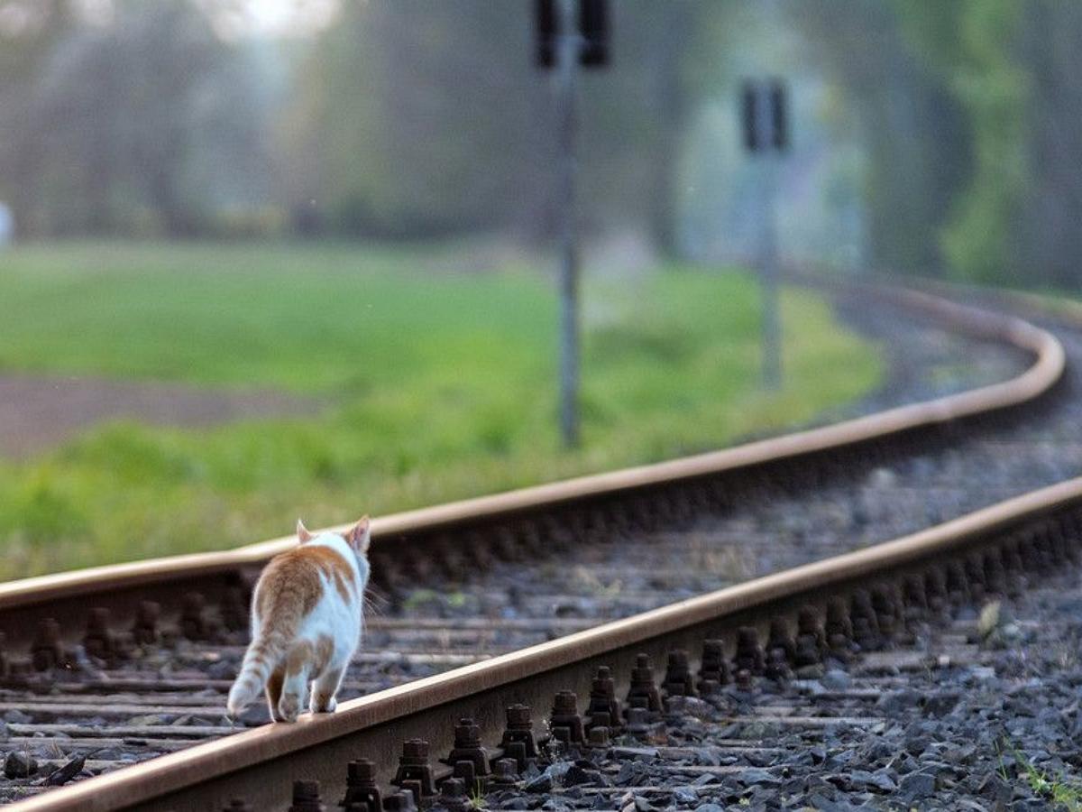 На вокзале в Великобритании появилась должность главного мышелова
