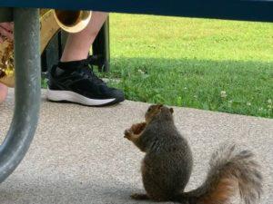 Cаксофонист в парке играл джаз для белочки