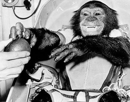 Животные, которые изменили мир и науку
