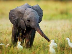 Игры слоненка и семилетнего мальчика умилили Интернет