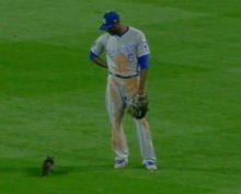 Кот ворвался на стадион посреди бейсбольного матча, затмил собой игру