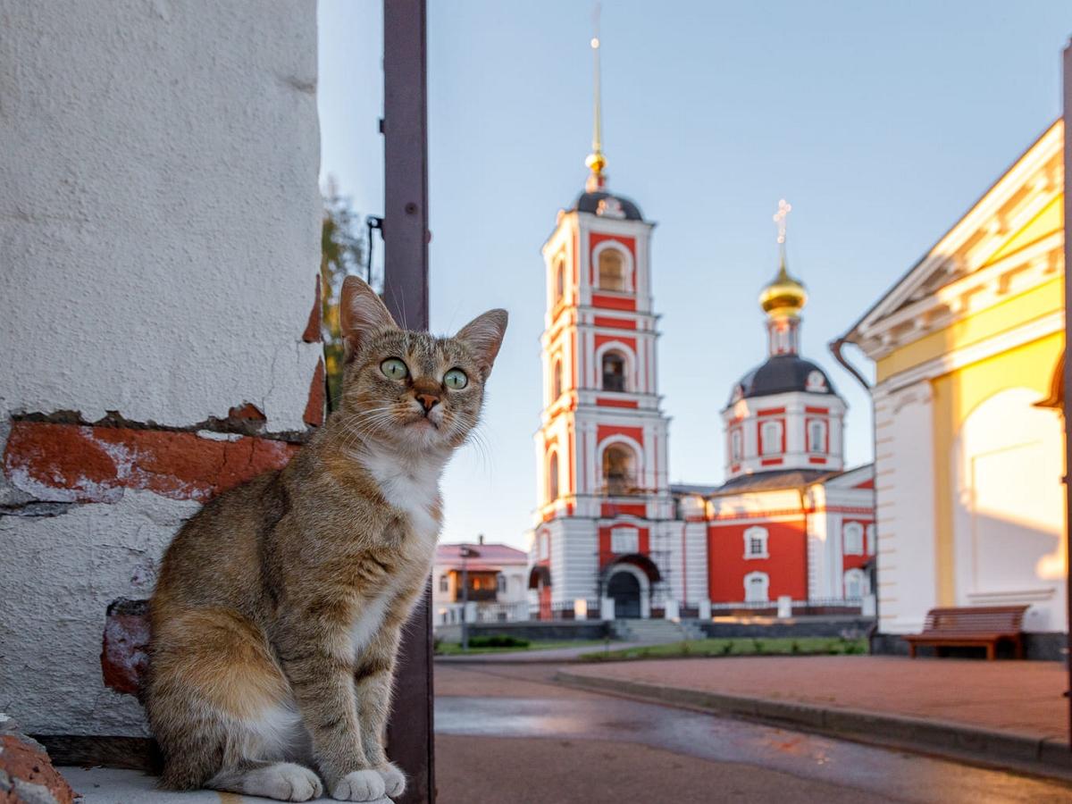 Православного кота в Краснодаре продают всего за 13 млн