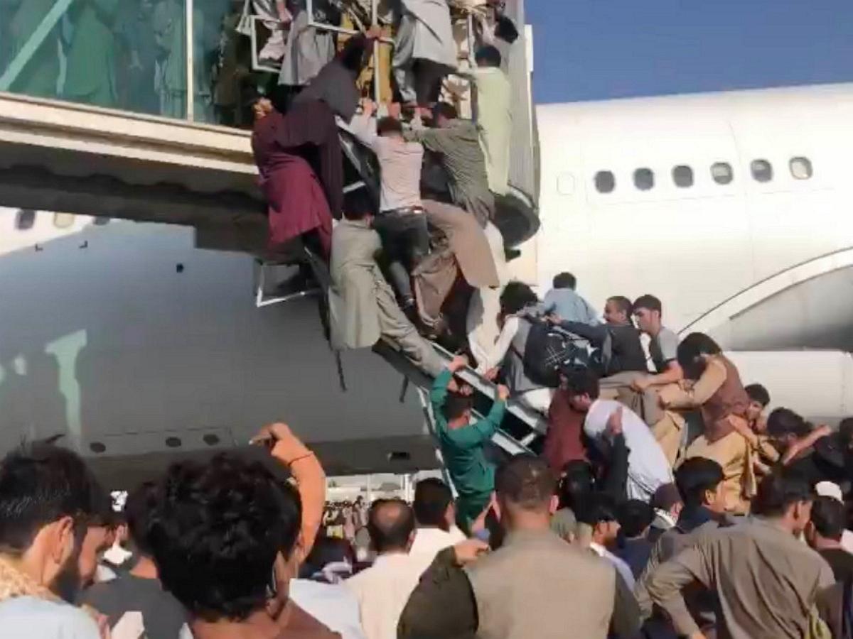 Фото собак в салоне самолета, вывезенных военными США из Кабула, на фоне хаоса в аэропорту произвело фурор
